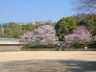 公園桜2009①.JPG